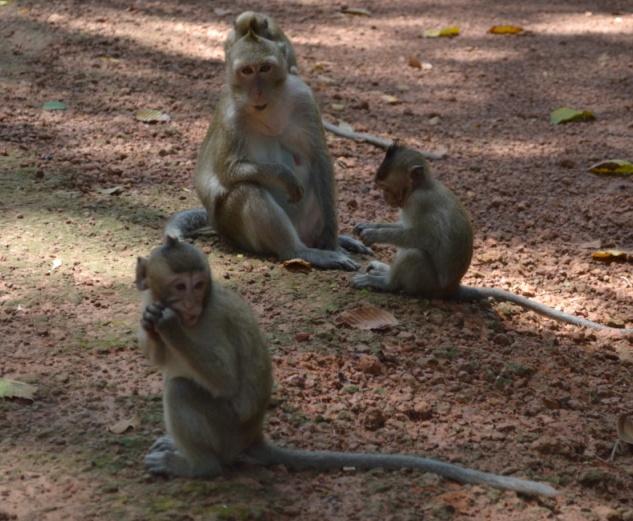 Monkeys of Angkor Wat