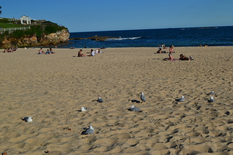 coogee beach coogee   (12)
