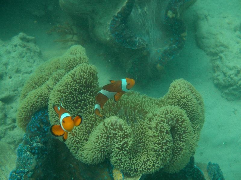 coral reef, alaminos (189)