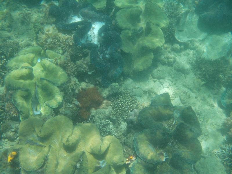 coral reef, alaminos